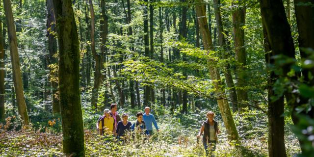 Randonnée en forêt Retz < Forêt de Retz