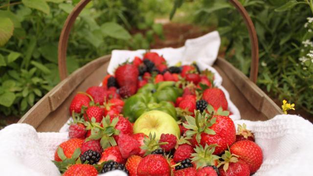 Fruits frais - panier pique-nique