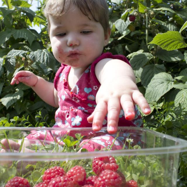 Manger des fruits cueillis sur place < Jardins de Pontarcher < Ambleny